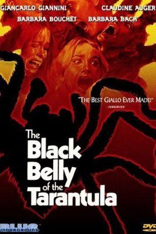 O Ventre Negro da Tarântula