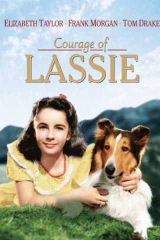 A Coragem de Lassie