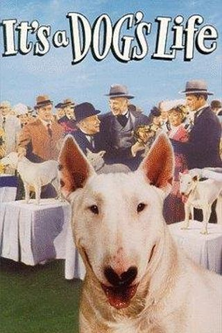 Aventuras de um Cachorro
