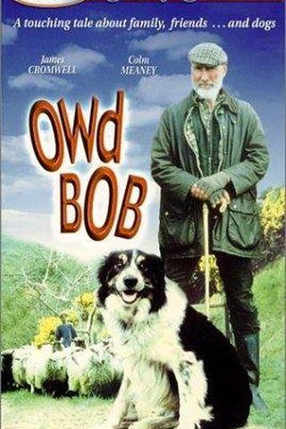 Meu Cachorro Bob