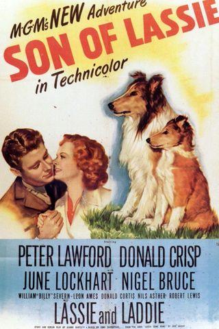 O Filho de Lassie