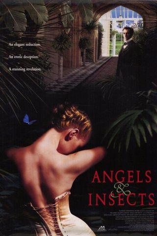 Anjos e Insetos