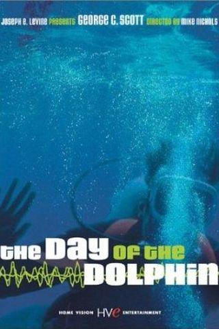 O Dia do Golfinho