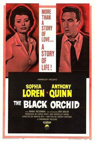 A Orquídea Negra